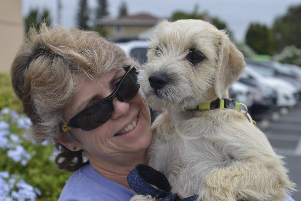 President Sharon Clifford with Oso, one of the Schnauzer-mix pups placed by C.A.R.E. this year.
